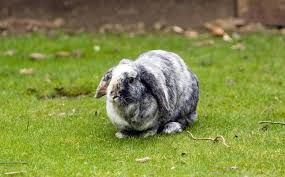 One of Brown Suit's Rabbits
