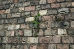 Wall at Jackson State Prison ruins Michigan